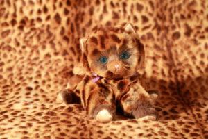Hannah's Kittens product shot